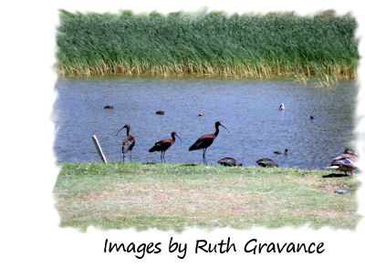 Images by Ruth Gravance