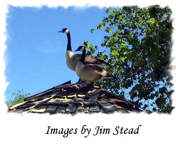 Images by Jim Stead